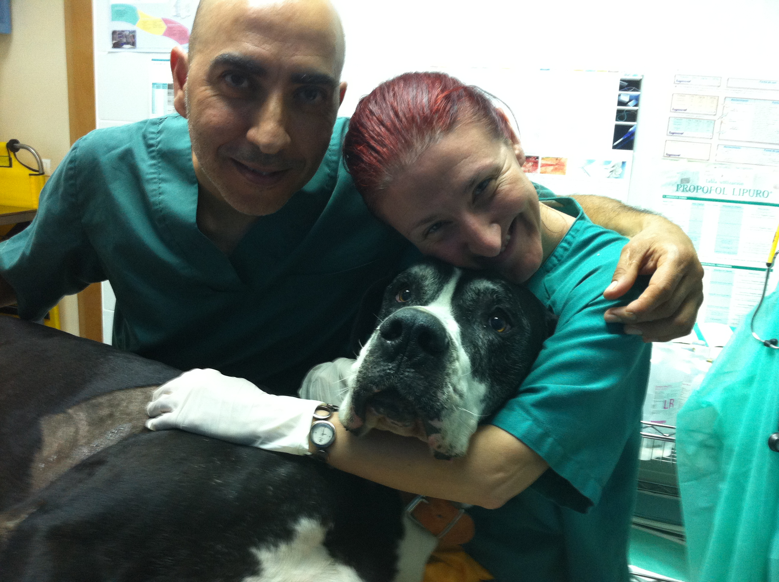 centro-veterinario-mutxamel