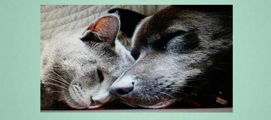 centro veterinario mutxamel - perro y gato