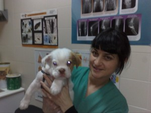 eva - equipo centro veterinario mutxamel