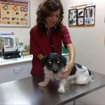 medicina preventiva - centro veterinario mutxamel